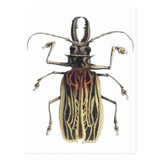 Escarabajo Largo-De cuernos, Prionus Cervicornis Tarjeta Postal