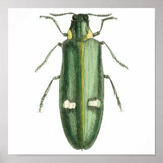 Escarabajo metálico del Madera-Taladro Póster