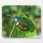Escarabajo Mousepad del Apocynum androsaemifolium