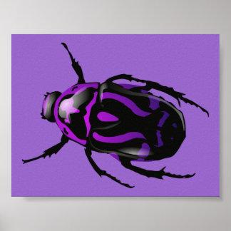 Escarabajo púrpura posters