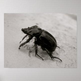 Escarabajo, rinoceronte impresiones