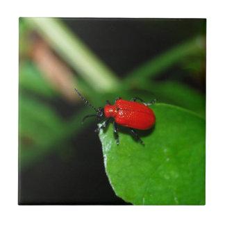 Escarabajo rojo brillante en la hoja verde tejas  cerámicas