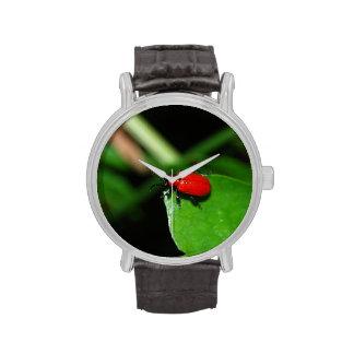 Escarabajo rojo brillante en la hoja verde reloj