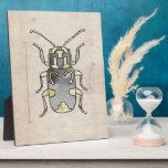 Escarabajo verde de la serie el | del insecto placa de plastico