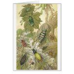 Escarabajos británicos tarjeta de felicitación