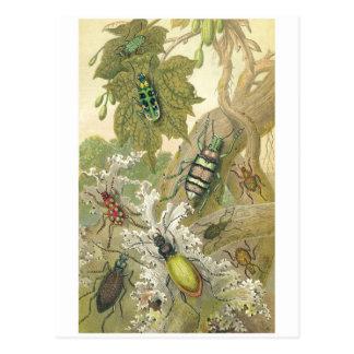 Escarabajos británicos postal