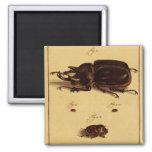 Escarabajos de rinoceronte iman