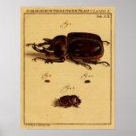 Escarabajos de rinoceronte impresiones