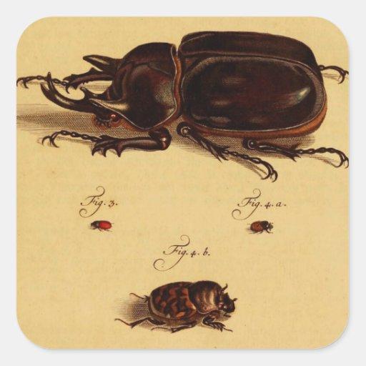 Escarabajos de rinoceronte pegatina cuadradas personalizada