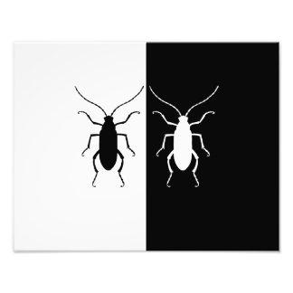 escarabajos fotografía
