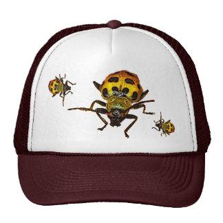 Escarabajos Gorro