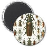 escarabajos imán de nevera