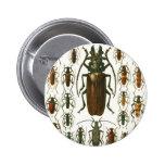 escarabajos pin