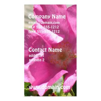 Escaramujo rosado tarjetas de visita