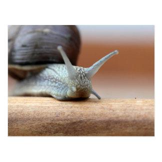 Escargot Postcard