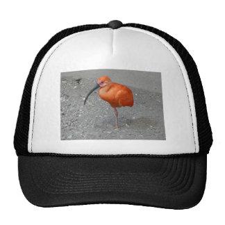 escarlata Ibis Gorros Bordados