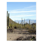 Escena 02 del desierto de Sonoran Postal