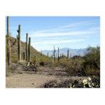 Escena 02 del desierto de Sonoran Postales