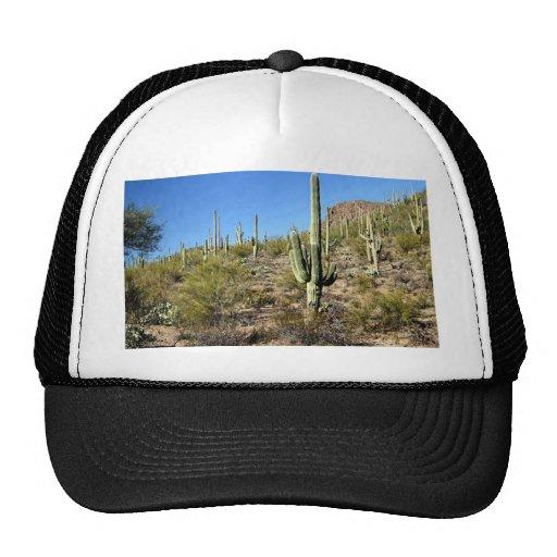 Escena 03 del desierto de Sonoran Gorro