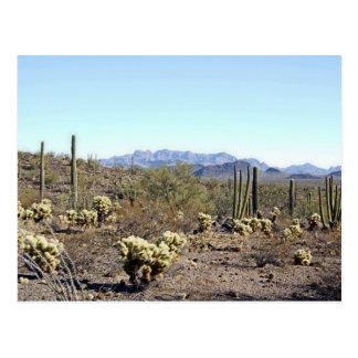 Escena 04 del desierto de Sonoran Postal