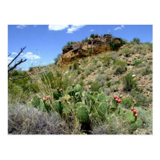 Escena 05 del desierto de Chihuahuan Postal