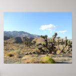 Escena 06 del desierto de Mojave Poster