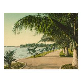 Escena 1898 de la Florida del vintage del Palm Bea