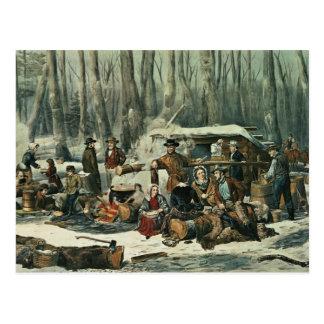 Escena americana del bosque - arce que azucara, 18 postal