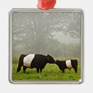 Escena brumosa de la vaca ceñida de Galloway que Adorno Cuadrado Plateado