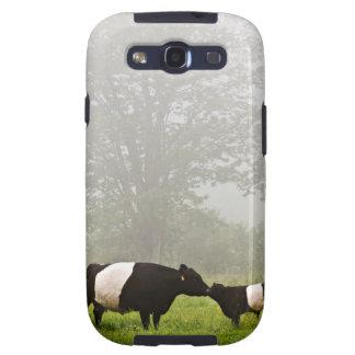 Escena brumosa de la vaca ceñida de Galloway que l Galaxy SIII Coberturas