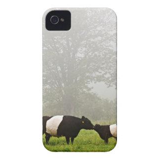 Escena brumosa de la vaca ceñida de Galloway que l iPhone 4 Protector