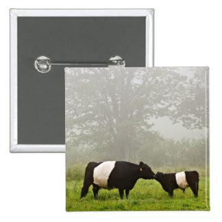 Escena brumosa de la vaca ceñida de Galloway que l Pin Cuadrada 5 Cm