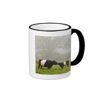 Escena brumosa de la vaca ceñida de Galloway que l Tazas