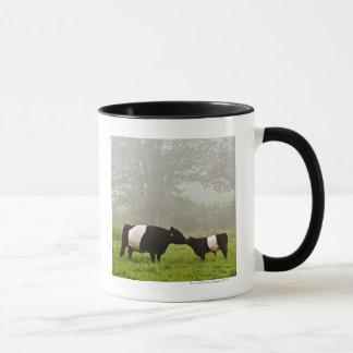 Escena brumosa de la vaca ceñida de Galloway que Taza