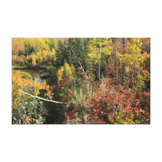 Escena canadiense del otoño del bosque impresión de lienzo