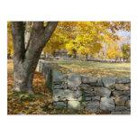 Escena de la caída con el árbol y la pared de pied postal