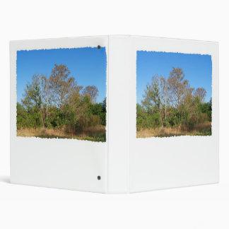Escena de la Florida Cypress calvo en un pantano