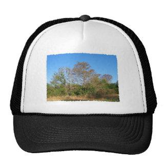 Escena de la Florida Cypress calvo en un pantano Gorras
