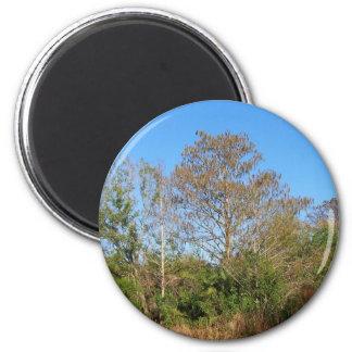 Escena de la Florida Cypress calvo en un pantano Imán Para Frigorifico