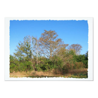 Escena de la Florida Cypress calvo en un pantano Invitación 12,7 X 17,8 Cm