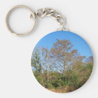 Escena de la Florida Cypress calvo en un pantano Llaveros