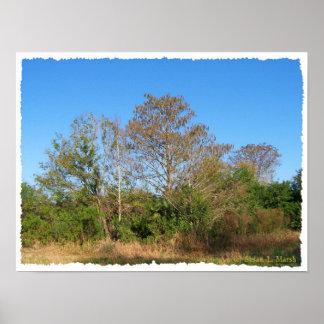 Escena de la Florida Cypress calvo en un pantano Posters