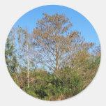 Escena de la Florida Cypress calvo en un pantano Pegatina Redonda