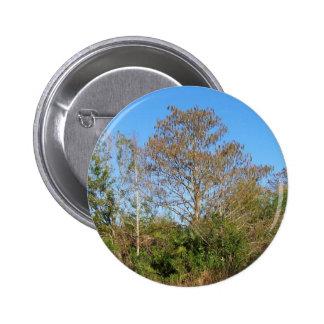 Escena de la Florida Cypress calvo en un pantano Pin Redondo 5 Cm