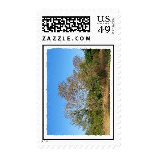 Escena de la Florida Cypress calvo en un pantano Sellos