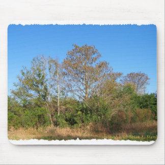 Escena de la Florida Cypress calvo en un pantano Alfombrilla De Raton
