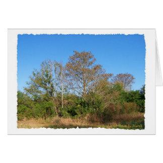 Escena de la Florida Cypress calvo en un pantano Felicitaciones