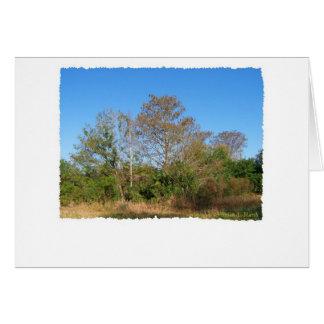 Escena de la Florida Cypress calvo en un pantano Tarjetas