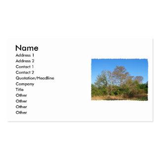 Escena de la Florida Cypress calvo en un pantano Plantillas De Tarjeta De Negocio