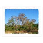 Escena de la Florida Cypress calvo en un pantano Postal